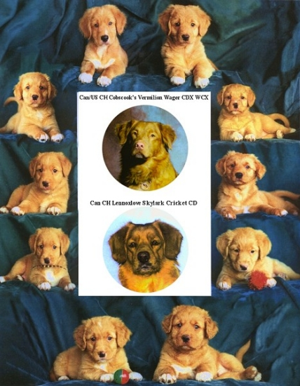Frame of puppies